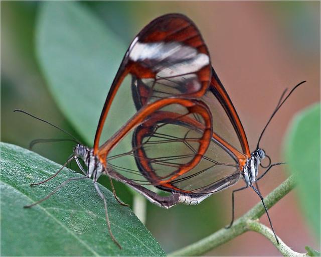 Transparent mating