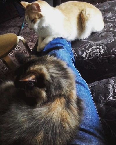 two_cats_on_my_legs