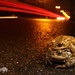 Erdkröten (Bufo bufo) in Amplexus by Weinand Wildlife