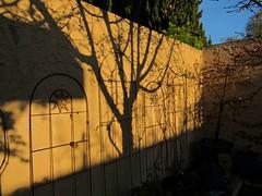 Shadows at sunrise