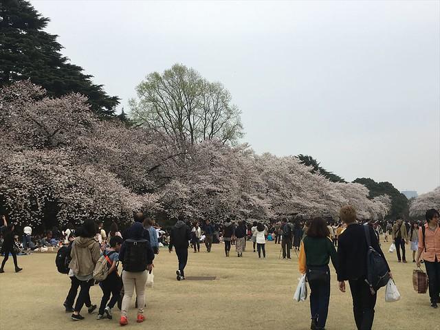 shinjyukugyoen02_R