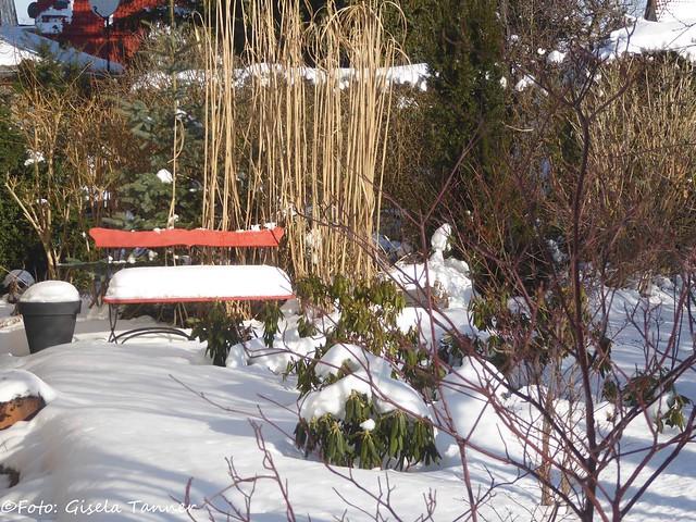 Der Winter ist zurück im Garten!