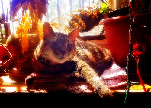 Sun worshipper