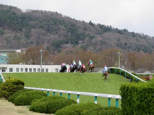 福島競馬場障害コースのバンケットをのぼる馬たち