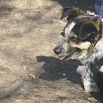 20180408-125437 - Hund