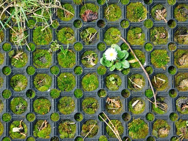 10/04/2018 Jardin en fleurs