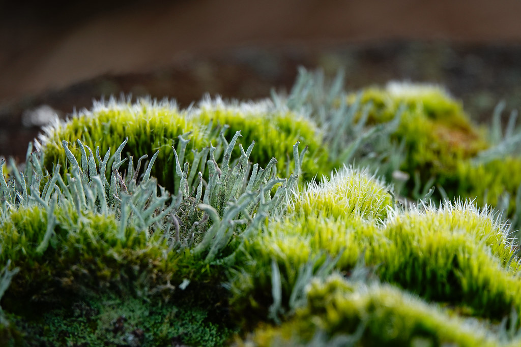 Different Mosses Koen Bernaers Flickr
