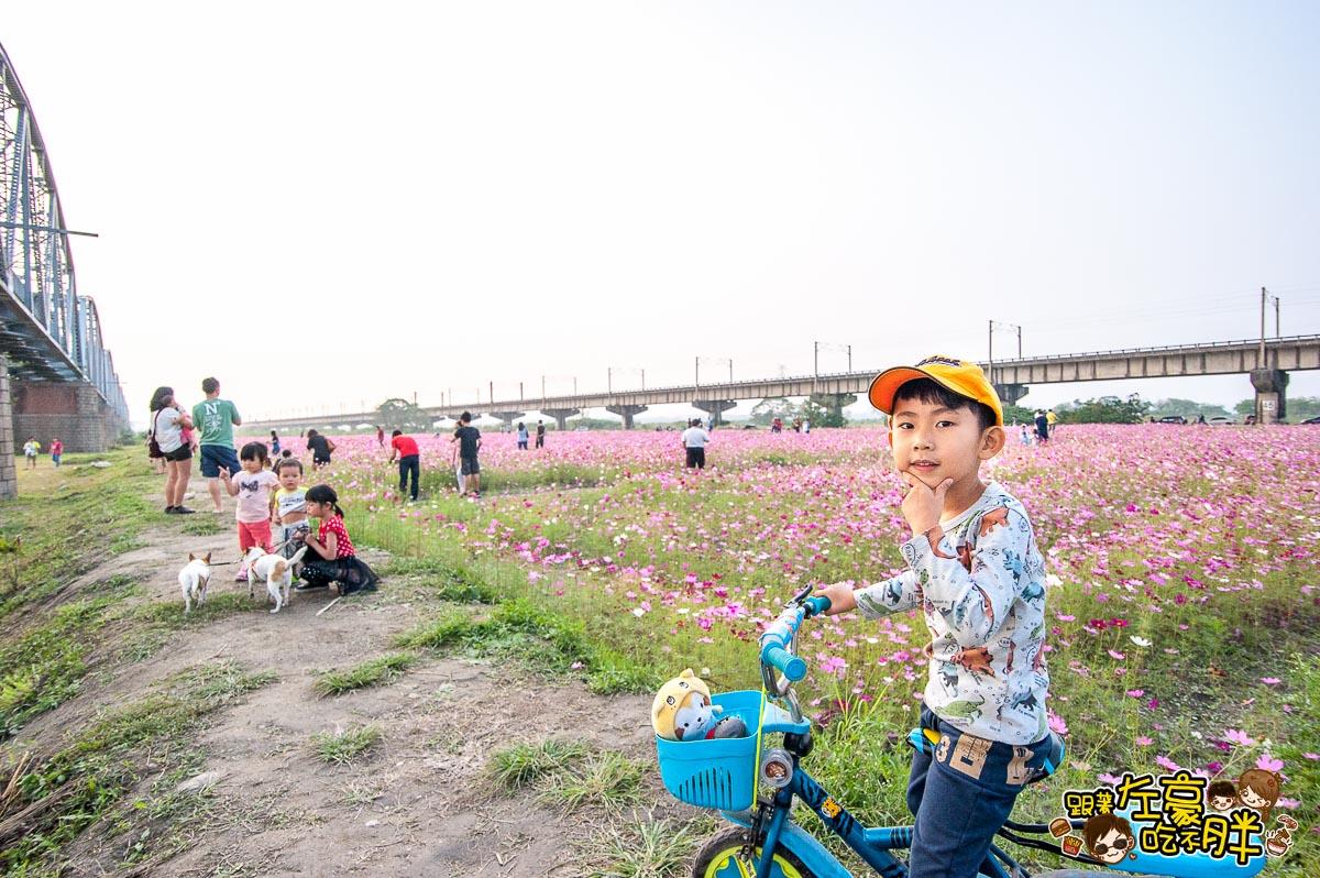 舊鐵橋(屏東端)花海-6