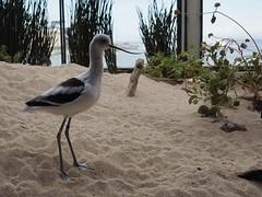 PG Visit March 2018 - Monterey Bay Aquarium