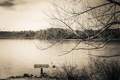 The Lake #36