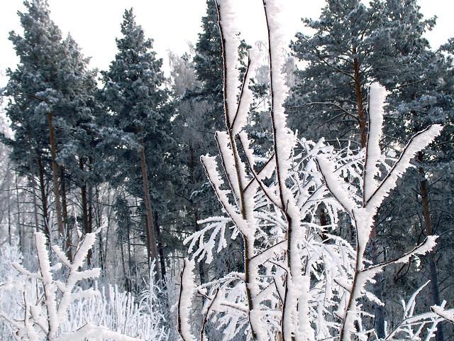 Зима разрисовывает деревья, Canon POWERSHOT A640