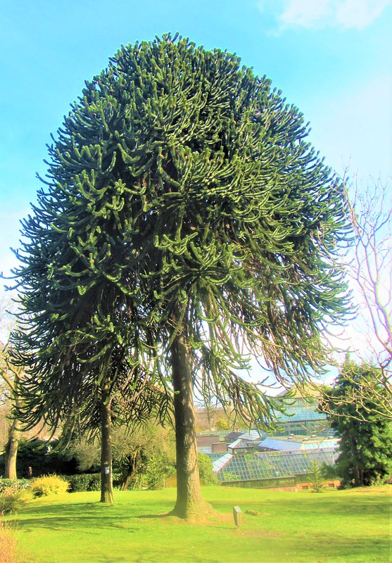 glasgow-ecosse-botanic-gardens-arbre-vegetation-thecityandbeauty.wordpress.com-blog-voyage-IMG_0091 (4)