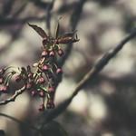 20180422-155650 - Spring Garden Bokeh
