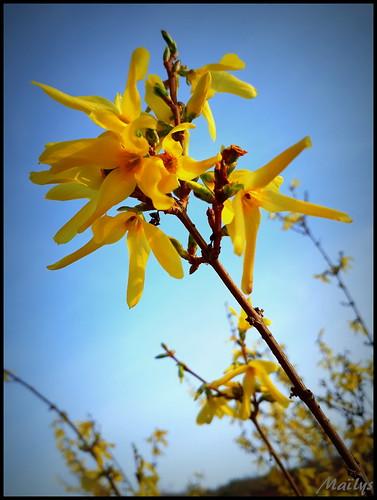 Soleil en branche