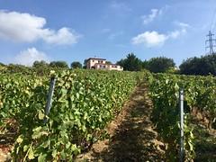 Wine Tour Vineyard - Photo of Le Broc