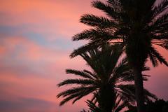 Sunrise Along Coffee Pot Bayou St. Petersburg Florida