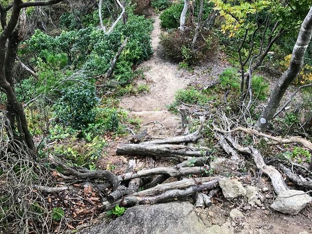 仙ヶ岳 南尾根 木階段