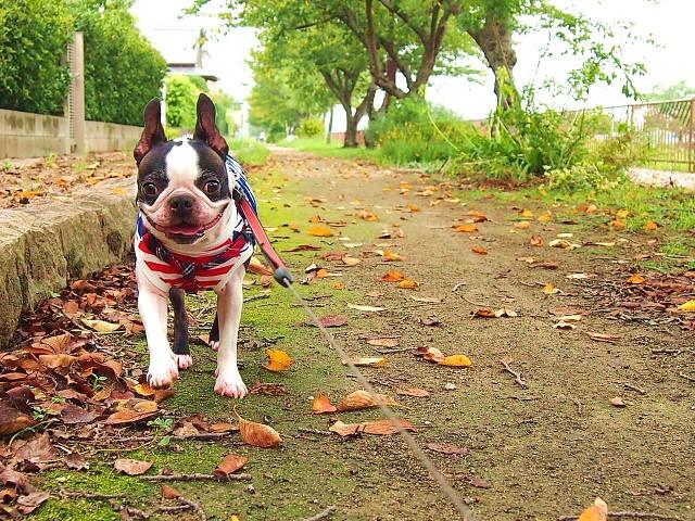 散歩を楽しむ子犬