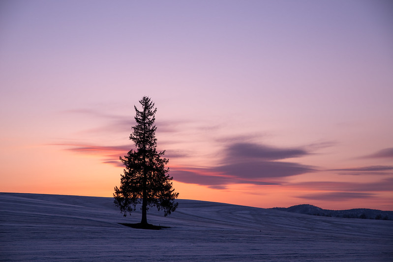 Sunset of X'mas tree
