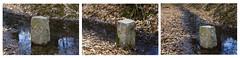 9461-2-3 Bornes armoriées en forêt de Rambouillet