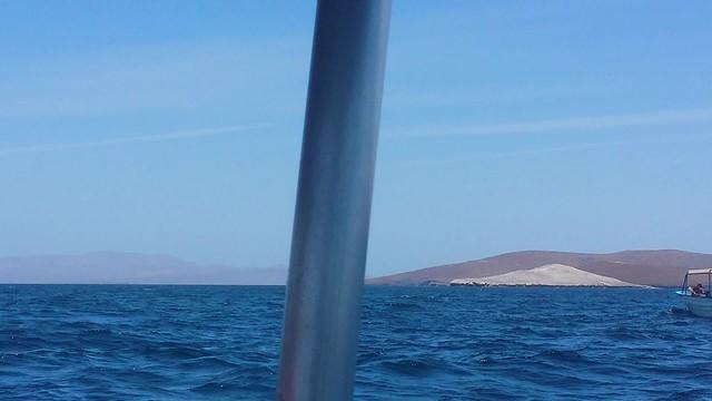 Video Humpback whale in La Paz Breaching