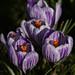 Spring 4 by darkside21