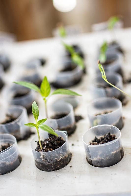 Orto - preparativi piante semenzaio