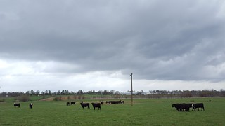 Rain clouds over pasture
