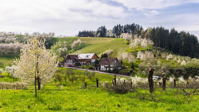 Oberkirch_149