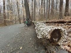 2018 Bike 180: Day 14 - Crusty Log