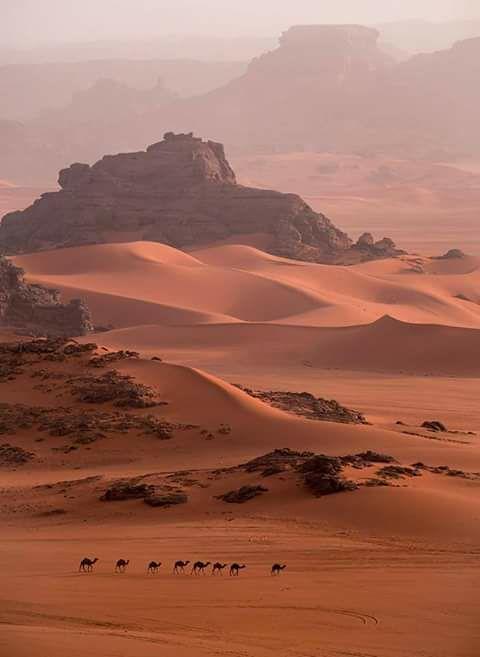 صور نادرة للطبيعة الجزائرية - صفحة 19 41302996101_b048a58a67_b