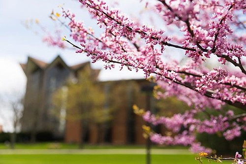 Waiting for that campus sunshine and blossoms as we look forward to spring coming soon to Valpo!