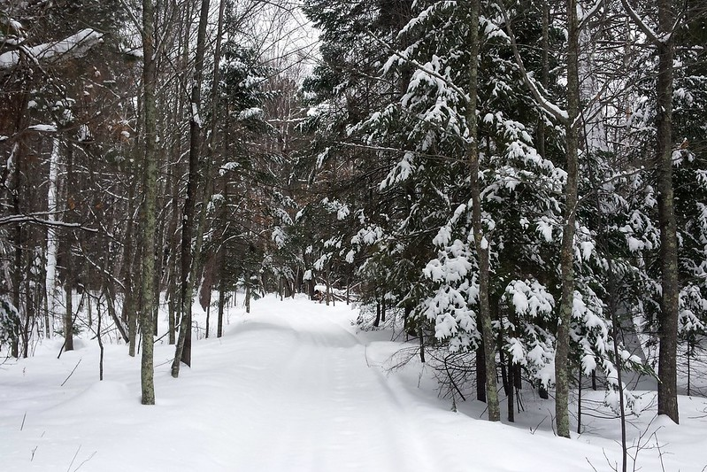Facing a snow-covered path lined with pine trees.