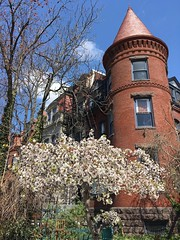 Tree in bloom and house with turret, S Street NW, Washington, D.C.