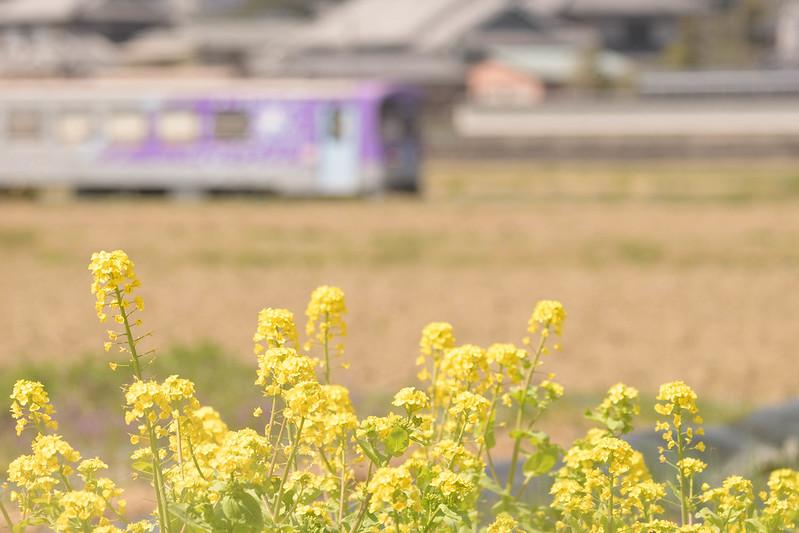 春の北条鉄道