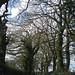 Hollyfast Lane, Allesley