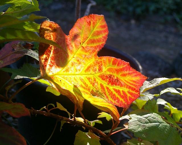 Autumn, Pentax *IST DL, Sigma 18-50mm F3.5-5.6 DC