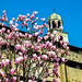 Easter Magnolias by werner boehm *