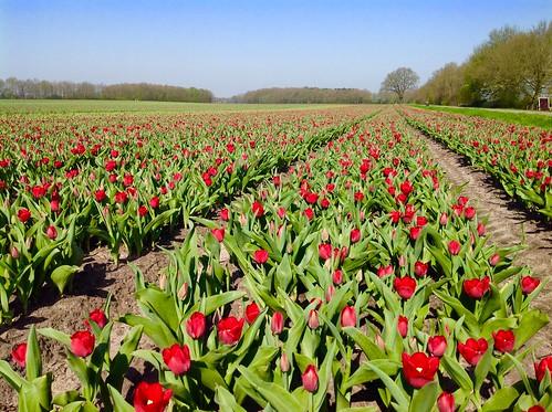 Orvelte. Lente in Drenthe met zomerse temperatuur. Foto: Tiny Post