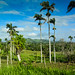 Countryside of Anamuya - Higuey Dominican Republic