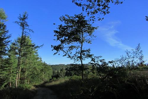 20120920 23 059 Jakobus Wald Weg