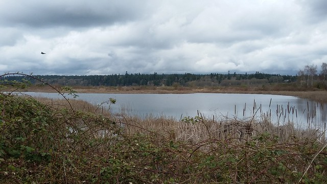 Iona outer pond