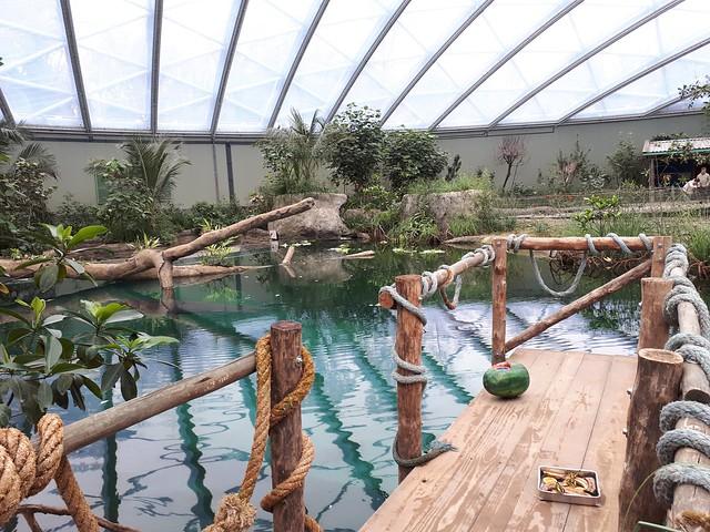 Mangrove, Burgers Zoo