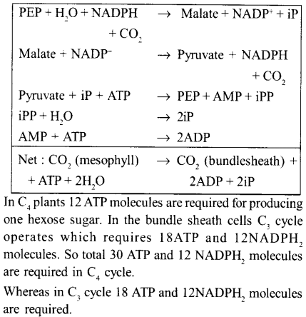 neet-aipmt-biology-chapter-wise-solutions Photosynthesis in Higher Plants - 23 explenation