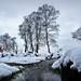 IMG_6425 - Matley Heath - New Forest - 18.03.18