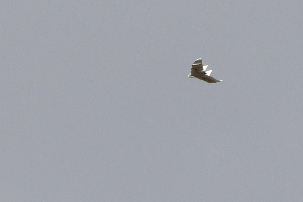 Buzzy plane