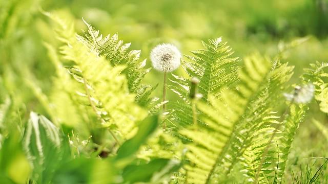 DSC08335-02花菜ガーデンH3004