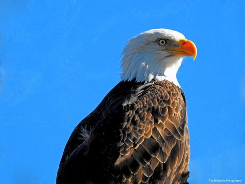 Eagle 750