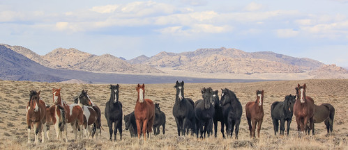 In the Country of the Mustang