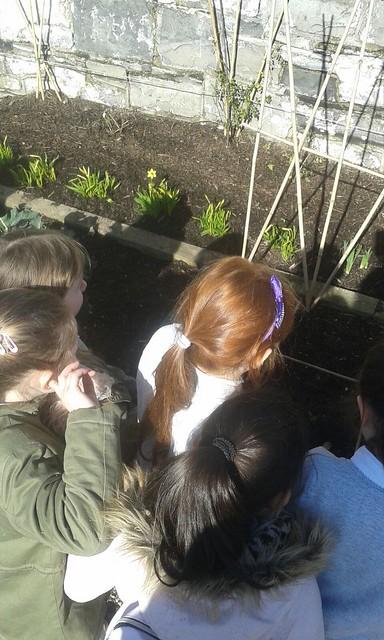 2nd Class Botanic garden